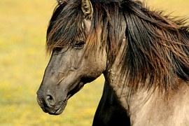 horse-337215__180